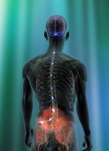 nugaros kairio sono skausmas paaiškino